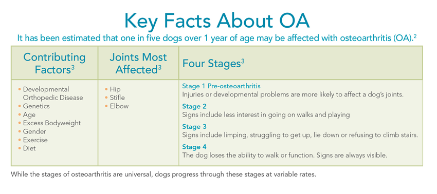 Adequan Canine factors stages osteoarthritis