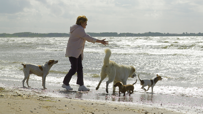 Adequan Canine woman beach four dogs